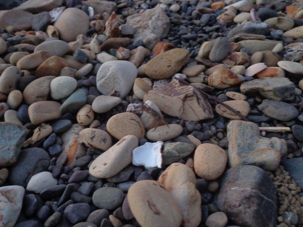 beachcombing-1